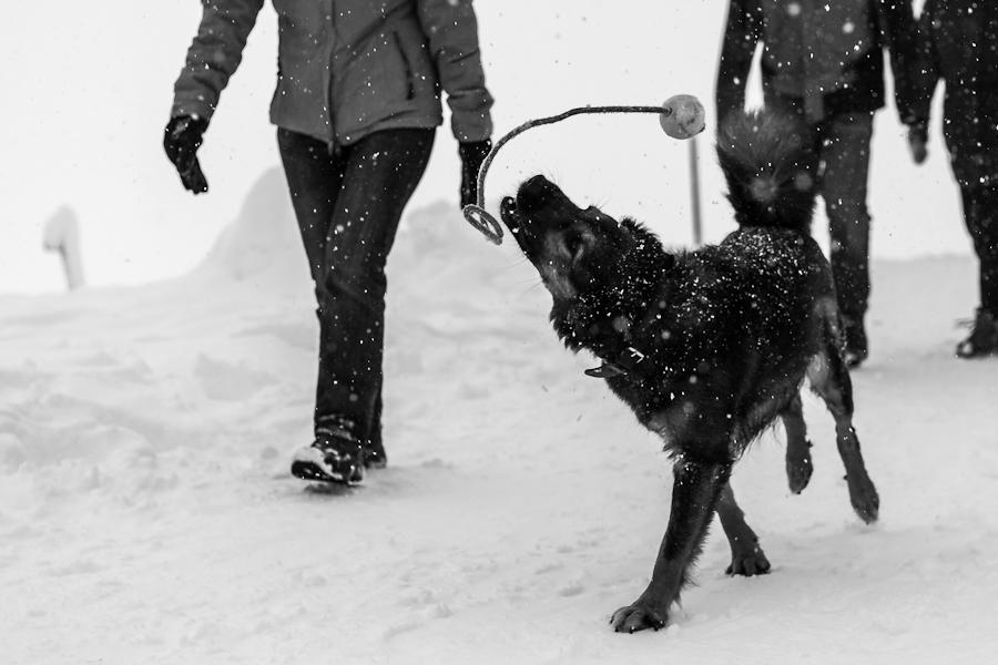 Baumstamm im Schnee auf dem Schauinsland